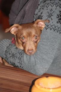 Milka lebt bei Simba in Nettetal.