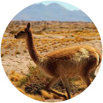 Chile Hautnah – Altiplano & Seenregion in 3 Wochen (mit Mehrtagestour)