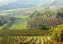 Weinviertel Riede