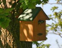 webcams broedende vogels