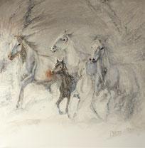 weiße Pferde mit braunem Fohlen im Schnee