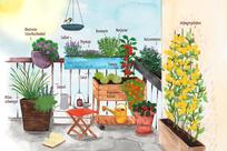Tipps für einen nützlichen sonnigen Balkon             (Bild: NABU/Anne Quadflieg)