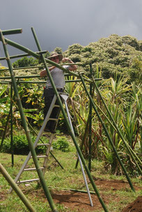 Framework for growing 'Ipu gourds Amy Greenwell Garden