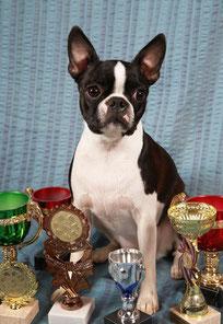 Наши чемпионы/Our champions - питомник Элит Бостон