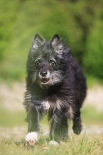 Hundetrainer / Taro / Foto Brigitte Kreisl