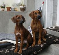 Nela und Schwester Pebbles