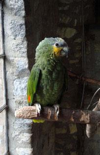Vogelburg Weilrod Amazone