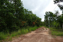 Small road along a forest edge in Phu Pan, Sakon Nakhon province Thailand