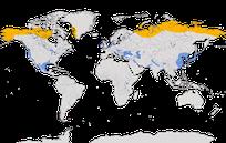 Karte zur weltweiten Verbreitung der Blässgans