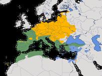 Karte zur Verbreitung des Girlitzes (Serinus serinus).