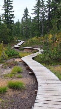 Trail im Strathcona Provincial Park