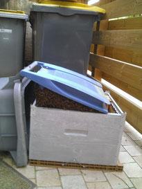 Mise en place de la ruche pour transférer l'essaim