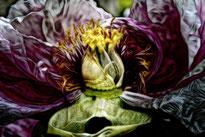 flower petals heart plant nature macro fractals creative