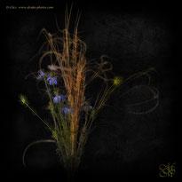 Composition florale  ♥