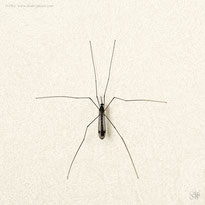 insect lines minimalism animal geometry graphics simplicity