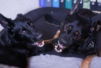Brava und Ares