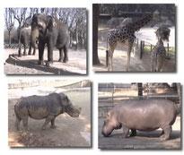 El elefante y otros grandes animales