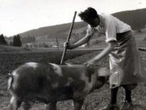 Vater mit Mastschwein - 1956