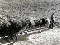Betra-Opa mit Kuhgespann - 1957