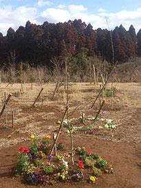 新しく植樹した木に沢山の方が見に訪れています。第三樹木葬地