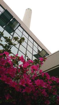 今月の高井戸地区センター。みごとな曇り空のもと、ツツジがまぶしかったです(°∀°)!