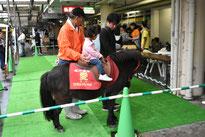 ミニチュアホース乗馬体験