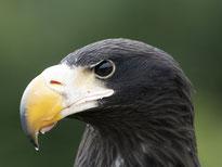 Greifvogelwarte Feldatal