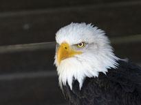 Greifvogelpark Hellental