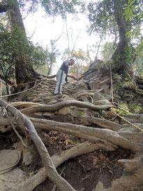 カズラ坂。全部木の根っこ!