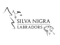Silva Nigra Labrador für die Jagd
