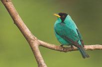 Observacion Aves orillas Lago Arenal