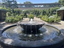 今週の1景(11月5日~11月11日) ケヤキの紅葉:大きな欅(ケヤキ)の木が午後の陽射しを浴びて赤や黄色に輝いていました。府中市の郷土の森公園にて
