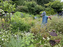 今週の1景(12月4日~12月10日) 葉が落ちたエノキ:深大寺城跡にて。神代植物公園の分園、水生植物園の小高い場所に戦国時代の城跡があります。時間が止まったような不思議な空間。