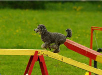 Sport mit Hund