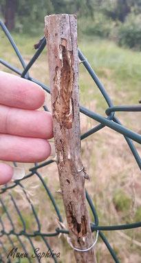 Nisthilfen Insektennisthilfen Insektenhotel Vogelschutz Specht Spechtschaden Aufgehackte Gänge Brombeerstengel