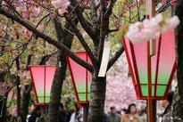 関西の桜の名所はコチラへ