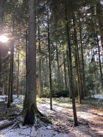 Der Zauberwald (Foto C. Leuppi)