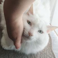 しらたまちゃん にゃんこ 猫 ねこ ネコ