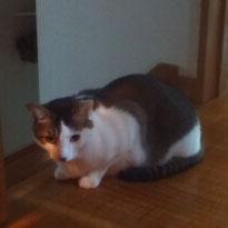 かいくん 猫 ねこ ネコ にゃんこ お留守番 川崎 大田区 シッター