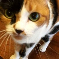 かのこちゃん 猫 ねこ ネコ にゃんこ ニャンコ お留守番 大田区 川崎