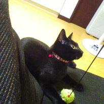 タマゴちゃん 5ヶ月 猫 ねこ ネコ にゃんこ 黒猫 お留守番 ペットシッター 大田区 川崎