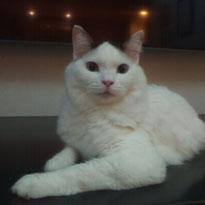 ナミタンちゃん 猫 ネコ ねこ にゃんこ ニャンコ 大田区 川崎 ペットシッター