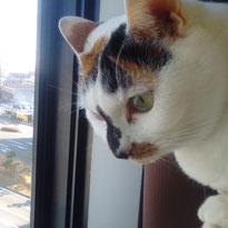 白玉ちゃん にゃんこ 猫 ねこ ネコ
