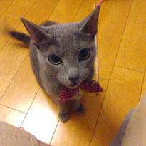 姫ちゃん 猫 ねこ ネコ にゃんこ お留守番 川崎 大田区