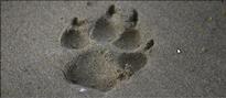 Hundetrainingszentrum Wyland
