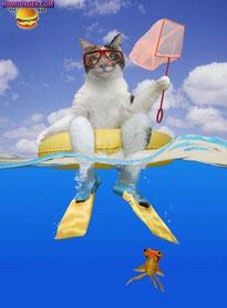 chat blanc sur bouée mer avec palmes et épuisette plongée poissons