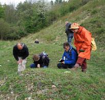 Kartierungs-Exkursion bei Sonneborn (LIP) 2014