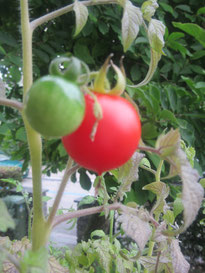 tomaten_balanceYou!©ChristinaBecker