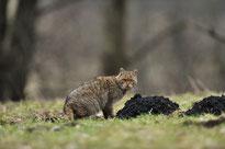 Plattenweg am ehemaligen Grenzstreifen bei Weferlingen; Foto: Michael Wetzel
