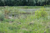 Regenrückhaltebecken in Billerbeck-Hamern